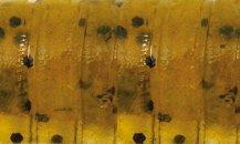 Rapture Ulc Water Shrimp 62mm/1g Watermelon Bf 8 db lágygumi csali